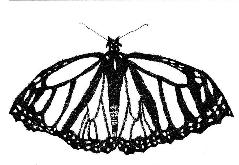 Monarch Butterfly Essence Portrait (Psalm 145- Hallel)