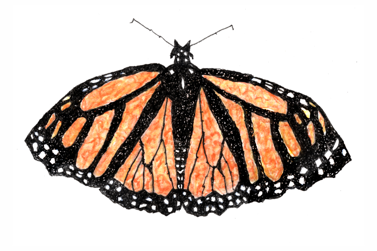 Monarch Butterfly Psalm 145 strokes by Judy Rey Wasserman