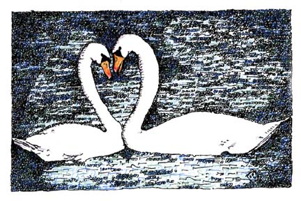Swan Couple - Song of Songs by Judy Rey Wasserman